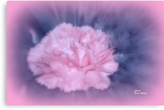 LET THERE BE LIGHT AND THERE WAS PINK!! by SherriOfPalmSprings Sherri Nicholas-