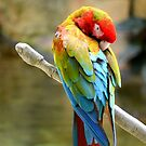 Macaw by anchorsofhope