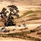 Australian Grassland Landscape by John Wallace