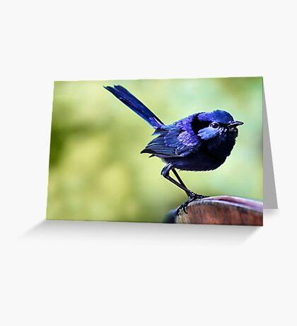 Splendid Blue Fairy Wren Greeting Card