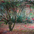 JFK Memorial Arboretum, Co. Wexford, Ireland by David Carton