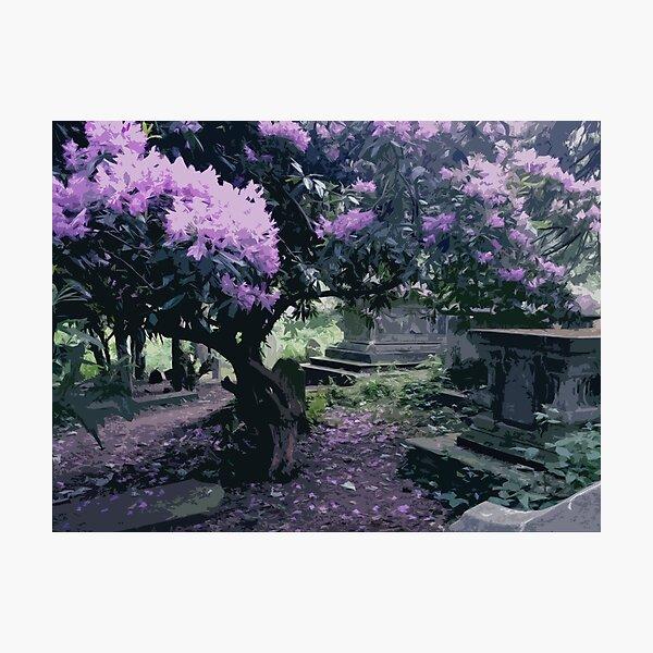 Blossoming Graveyard Photographic Print