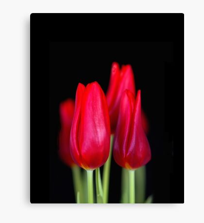 """""""In the Bulb there is a Flower"""" Canvas Print"""