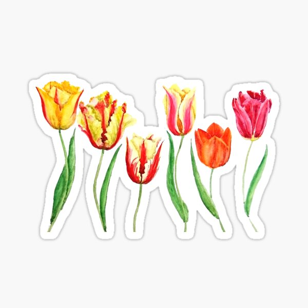 colorful tulips flower watercolor painting  Sticker