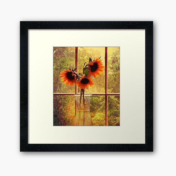 Sunflowers in September Framed Art Print