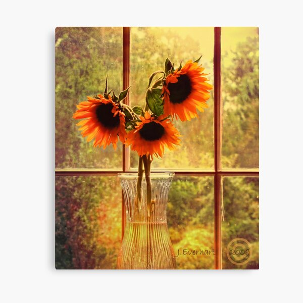 Sunflowers in September Canvas Print