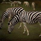 Zebra crossing by Lissywitch