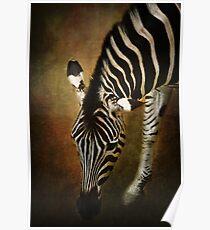 Z is for....Zebra Poster