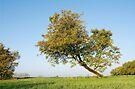 Autumn tree by Patrick Morand