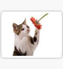Kitten playing Sticker