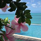 Hibiscus in Antigua by Christine  Wilson