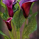Calla Lily by Lissywitch
