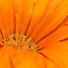 Just Orange! by Lissywitch