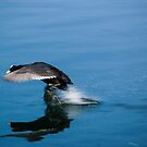 Coming In To Land by ABGPhotography