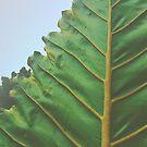 One Big Leaf by OLIVIA JOY STCLAIRE