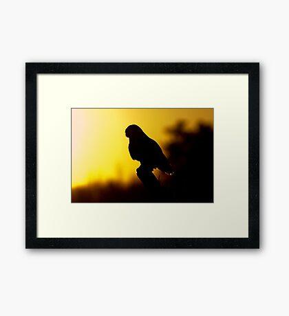 Night Owl - Snowy Owl Framed Print