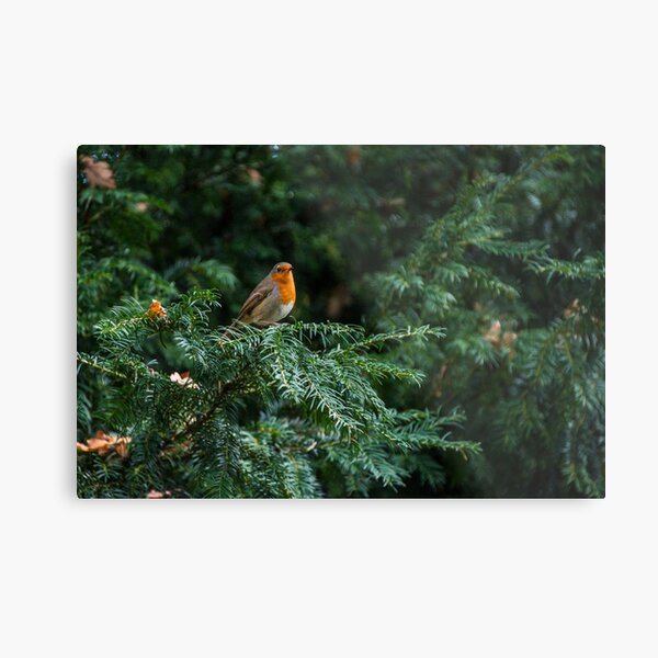 Robin In A Tree Metal Print