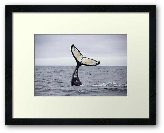 Waving Whale's Tail by Michelle Callahan