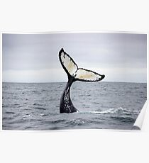 Waving Whale's Tail Poster