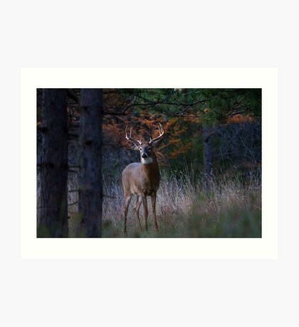 White-tailed Buck Art Print