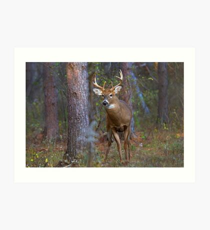 Who goes there? - White-tailed Buck Art Print
