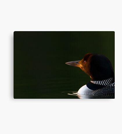 Dawn Breaks - Common loon Canvas Print