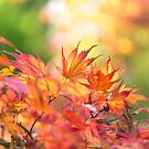 Autumn in the frame by Zoe Power