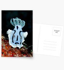 Nudibranch Postcards
