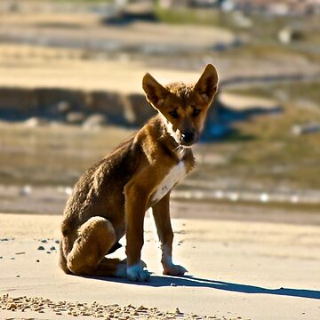 dingo puppy by mandyemblow