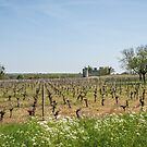 Budos Castle and vineyards by DebbyScott