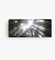 Giants of the Trees Canvas Print