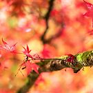 Autumnal magic by Zoe Power