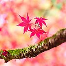 Autumnal pinks by Zoe Power