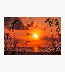 Grass Silhouettes At Sunrise Photographic Print