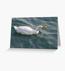 ducks on lake Greeting Card