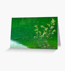 Green Lake and Tree Greeting Card