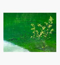 Green Lake and Tree Photographic Print