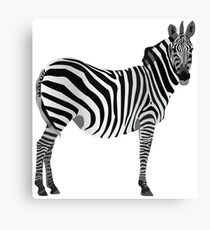 Zebra, Graphic Design Canvas Print