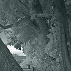 three benches along the seawall by jackson photografix