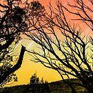 Der Himmel brennt von David  Harris