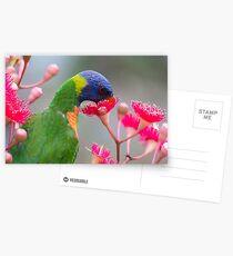 Rainbow Lorikeet Postcards