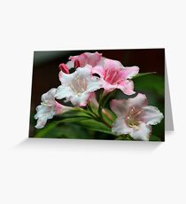 White pink flowers. Greeting Card