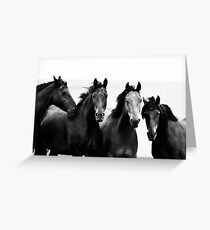 Mares Greeting Card
