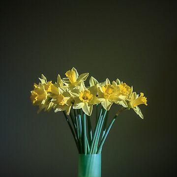 Daffodils by lucylucy