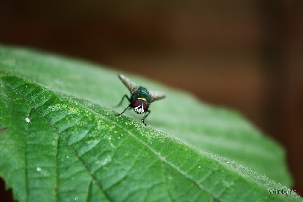 What You Looking At Fly? by WilMorris