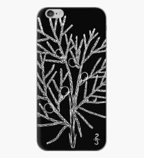 Britton And Brown Illustrated flora of the northern states and Canada 0877 Juniperus virginiana drawing iPhone Case