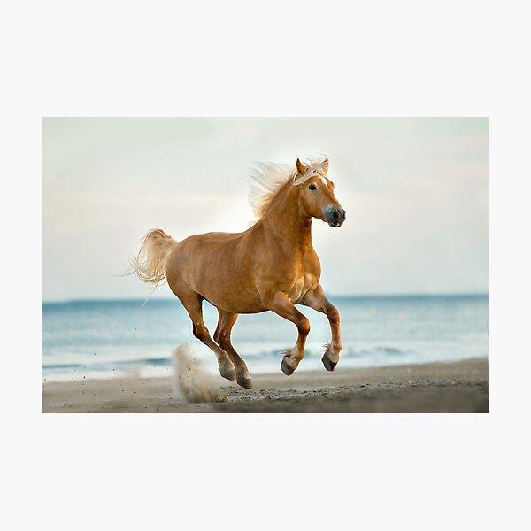 Haflinger Pferd Fotodruck