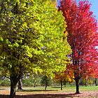 Two Beautiful Trees by lorilee