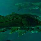 Fishy by Zzenco