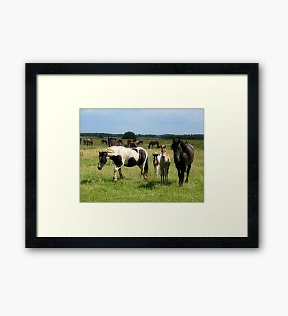 Living Free Framed Print
